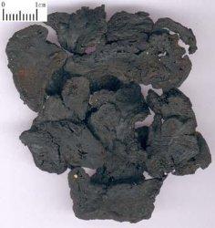 Wurzel der Wurzel-Rehmanniae/Rehmannia/Sheng Di/Di Huang