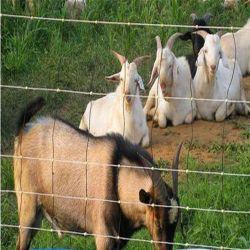 Resistente à corrosão gerador de campo das vacas/Deer/Cabra/ovinos /empurrador de Cavalos