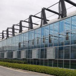 Haute efficacité trempé de Venlo serre avec verre de flottement