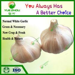 Versorgung Bio frischen normalen weißen Knoblauch mit Mesh Bag