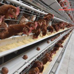 [إل] [سلفدور] حارّة عمليّة بيع بطارية طبقة قفص مع تصميم جيّدة & حارّة يغلفن دجاجة قفص في دجاجة حظيرة
