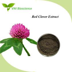 ISO Trifklium Extrait certifié SGS/TRIFOLIUM PRATENSE L'extrait ou extrait de trèfle rouge