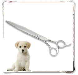 Perro de la moda de tijera de peluquería