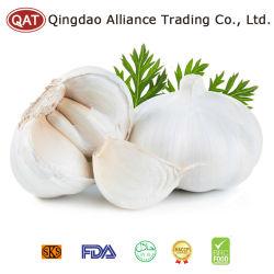 El blanco puro de ajo enteros con precio competitivo