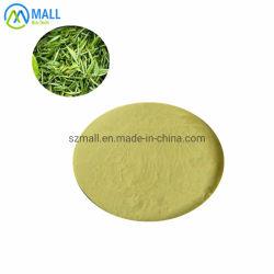 Instant Green Tea Pulver mit 30% Tee Polyphenole