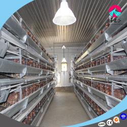 Aves de capoeira de frangos de carne de frango de baixo custo derramado Farm Equipment Design