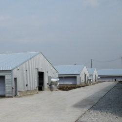 Pembabricated Poultry House Con Attrezzatura Completa