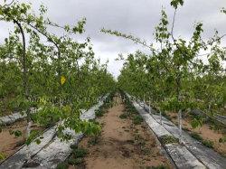 [بّ] بلاستيكيّة [ويد] عائق منظر طبيعيّ بناء أرض تغذية لأنّ مشمّع وقاية