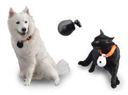 Digital Eye Pet collier de la came Camera Video Recorder Monitor pour chien chat Puppys