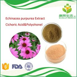 Het Chinese Natuurlijke KruidenPoeder van het Uittreksel van Echinacea Purpurea van het Uittreksel met Zuur Chicoric en Polyohonel