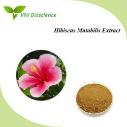 ISOsgs-Bescheinigung-Hibiscus-Blumen-Auszug-hölzerner Lotos/Hibiscus Mutabilis Auszug