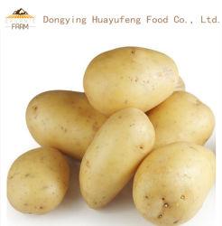 /Natural-organische Kartoffeln der frischen Kartoffel