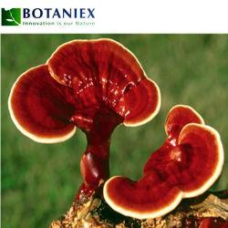 Mayorista de alimentación de la fábrica el extracto de Ganoderma lucidum/Lingzhi Rojo/extracto en polvo Extracto de hongo Reishi