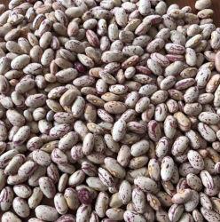 Круглая форма пищевые бобы Пинто лампа крапчатый почки бобов