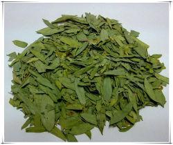 工場自然なEucommiaの葉Eucommia Ulmoides Oliv。 葉のエキスの粉