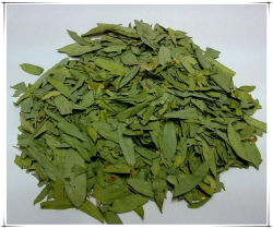 Fabrik natürliches Eucommia Blatt Eucommia Ulmoides Oliv. Blatt-Auszug-Puder