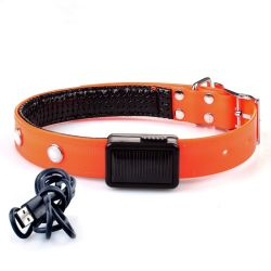 LED luminoso Rechargerble Colares de Cão alimentado por energia solar USB com fivela de Ajuste de Aço Inoxidável