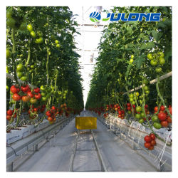 برنامج جرينهاوس للفيلم الزراعي الصناعي عالي الجودة مع نظام الإخصاب/الإخصاب من أجل زراعة الخضار