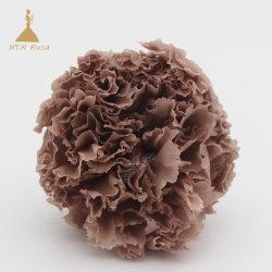 El uso de la flor de clavel Presereved haciendo regalos de cumpleaños y artesanía