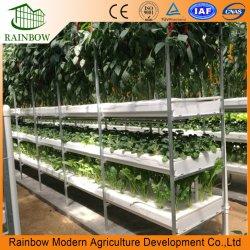Het Systeem van de hydrocultuur voor het Planten van de Komkommer en van de Sla van Tomaten
