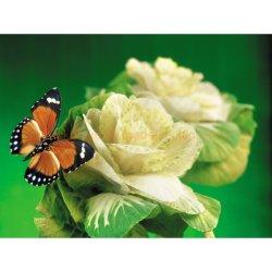 Le paysage et l'amour subaquatique Butterfly DIY Diamond Peinture Art Dlh1013