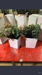 Kleiner weißer heller farbiger kundenspezifischer Farbanstrich konzipiert intelligenten Hauptinnenkeramischen Pflanzer-Blumen-Garten-Plastikpotentiometer für Schreibtisch