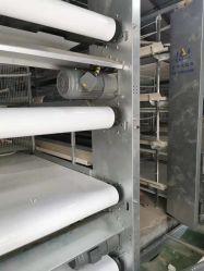 Durablee completamente automatico Muti Teirs H tipo strato Cage caldo Gabbia delle wiremeshes galvanizzata