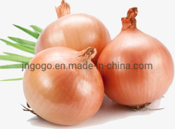Cipolla gialla fresca professionale per Exporting/SGS