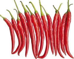 Nova cultura chinesa lavagem a seco/vermelha fresca crescer Pimenta Quente