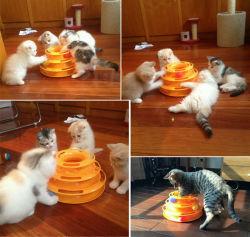 3단계 PET Cat Toy Tower Tracks Disc Cat Intelligence 놀이 시설 트리플 페이 디스크 Cat Toys Ball Training 놀이 시설