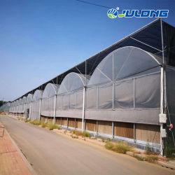 Faible coût de la culture hydroponique Polytunnel ferme du système de serre serre de film plastique multi-span utilisé des serres