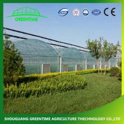 Multi-Span Film/feuille en polycarbonate/PC/Tunnel/serre agricole pour le secteur commercial utilisé
