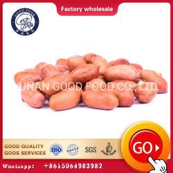 バルク輸出販売のために使用できる自然な未加工大胆なピーナツ
