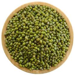 Neue Crop getrocknete grüne Mungbohne zum Verkauf