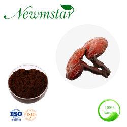 Natural 100% Puro Reishi hongo Ganoderma lucidum extraer