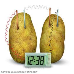Зеленый науки проект дома школу DIY игрушка эксперимента комплект картофеля часы