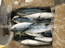 De nouveaux fruits de mer congelés de débarquement japonais queue jaune