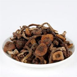 Wild Honey Secas Cogumelo Hazel Mushroom