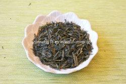 Haut de recommander à la vapeur de thé vert Sencha