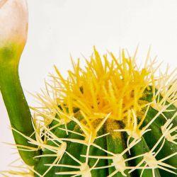 Beste Art-künstliche gefälschte Kaktus-Pflanzendekoration für Haus und Büro