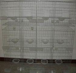 Gabbia Breeding del piccione del collegare di alta qualità da vendere
