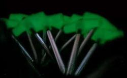 Noctilucent Plastic Hoofd en Gemalen Spijkers