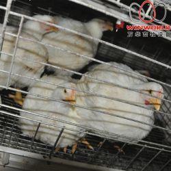 غابون [بوولتري فرم] مشروع إطار لحم دجاجة قفص مع آليّة دجاجة سماد آلة نظيفة