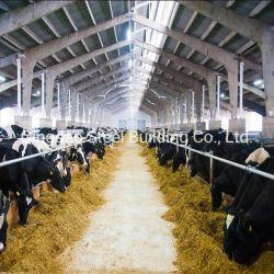 Prefabricados arroja granja lechera de la casa de la luz de la construcción de la estructura reguladora de acero Industrial galpón para la construcción de Galpón de la comunidad de la vaca prefabricados casa