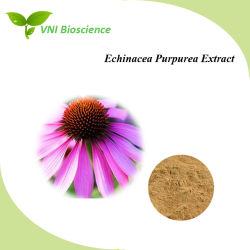 Fabricant 100% naturel d'alimentation Echinacea purpurea Extract