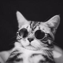 Occhiali da sole popolari del gatto di modo dell'animale domestico, gatti di vetro di Sun, animale domestico Accessoires