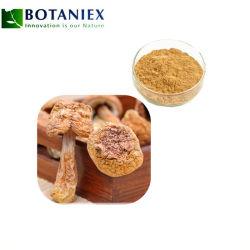 Agaricus blazei Extrait Extrait de champignons de la médecine ingrédients additifs alimentaires