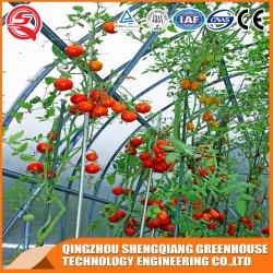 水文系を備えた経済的で実用的なフィルムトンネル温室 ローズ、トマト、ストロベリー、レタス、キュウリの植樹