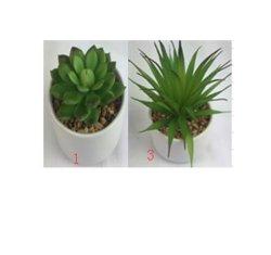 الذكورة الصناعية في النبات الصناعي بوت هدية خضراء، زهرة اصطناعية