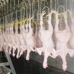 6000 bph matadero de aves de corral de sacrificio de la máquina de sacrificio del equipo de pato